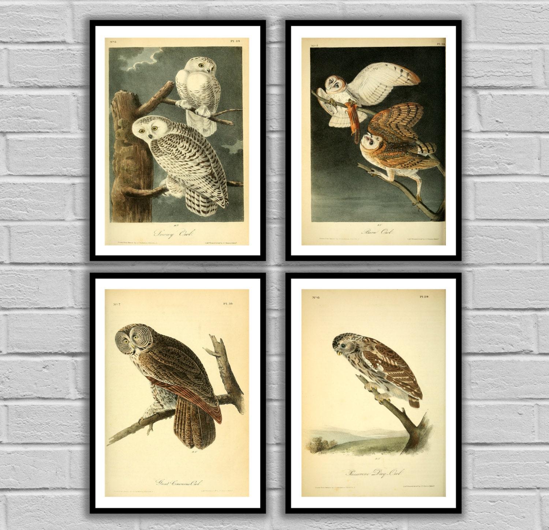 Vintage Owls - Vintage Bird Set of 4 - Print or Canvas - Antique Owl ...
