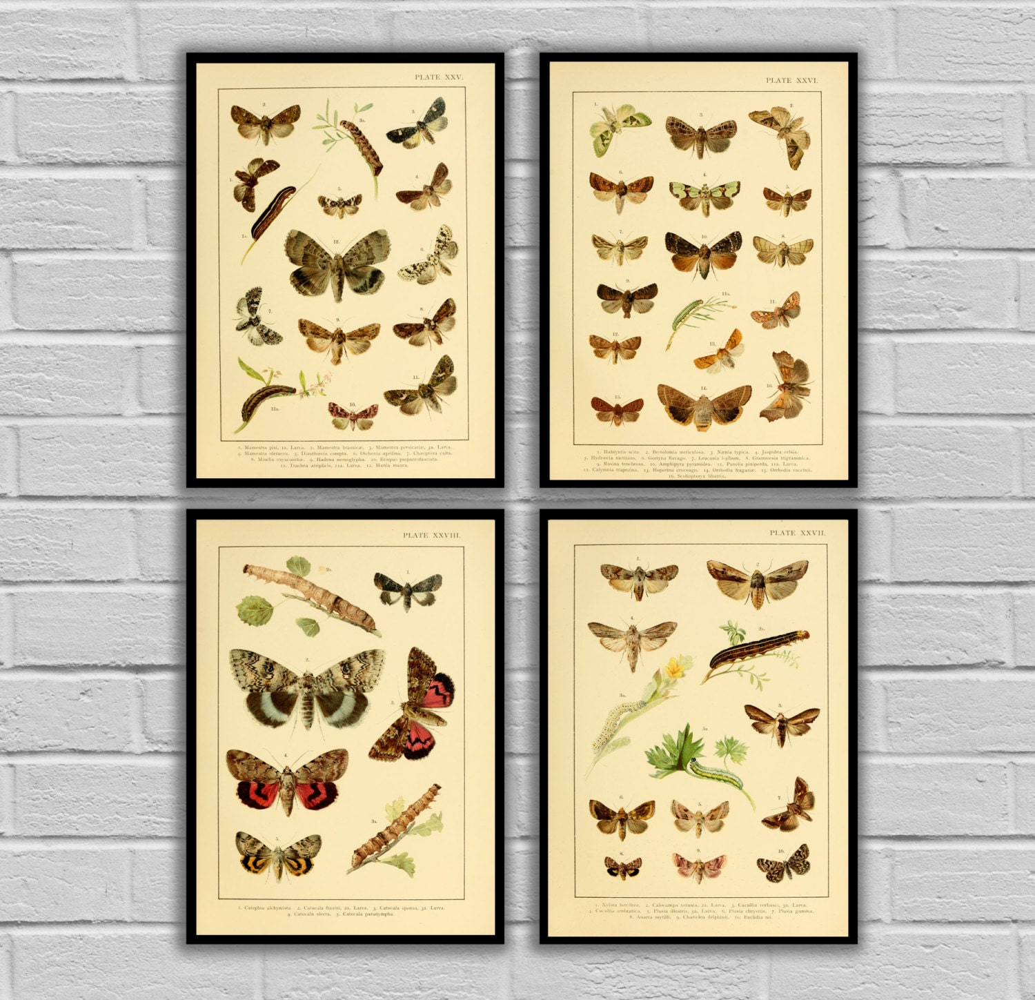 Vintage Moths and Caterpillars - Set of 4 - Print or Canvas ...