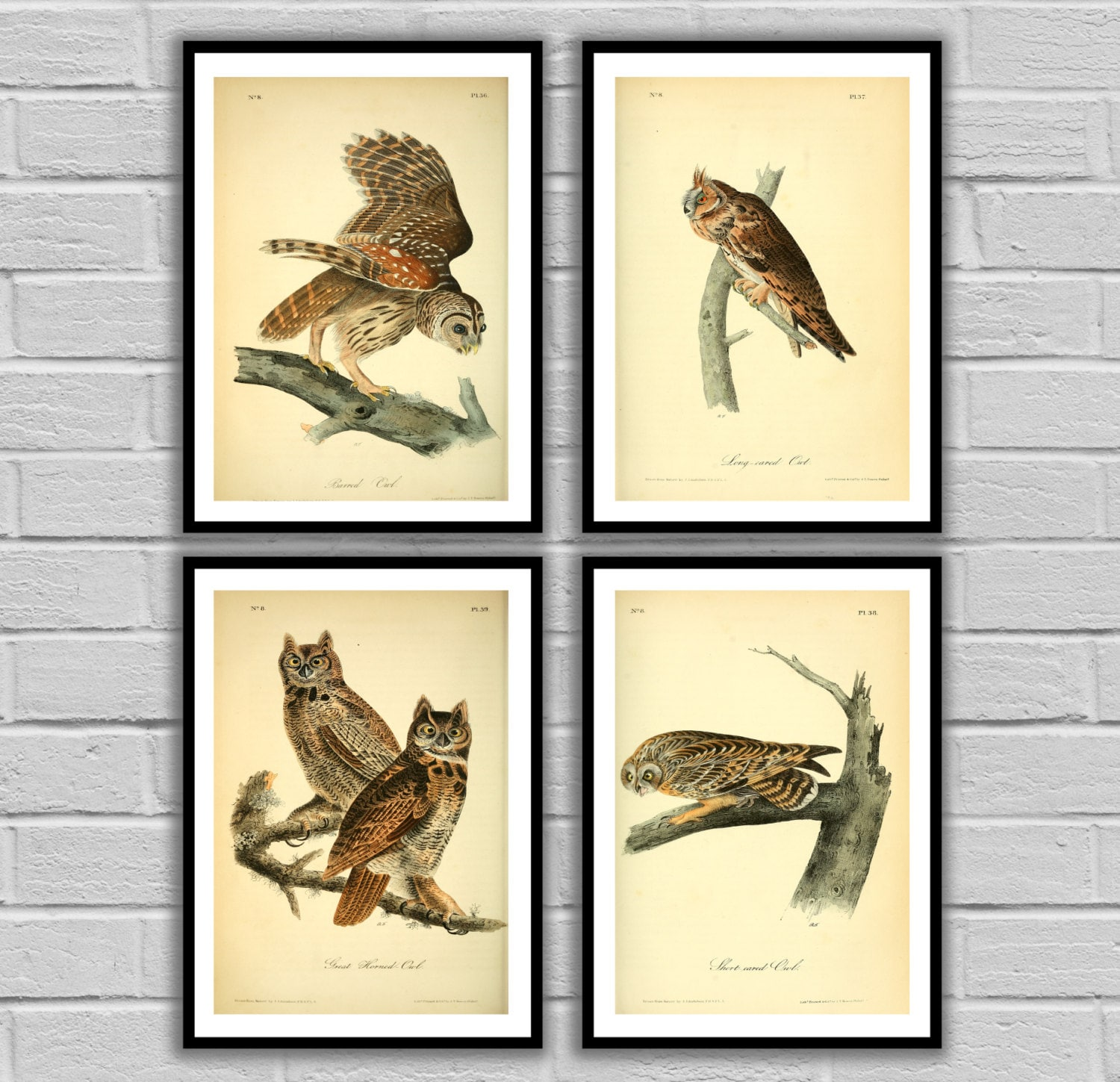 Vintage Owls - Vintage Bird Set of 4 - Print or Canvas - Antique Owl ...