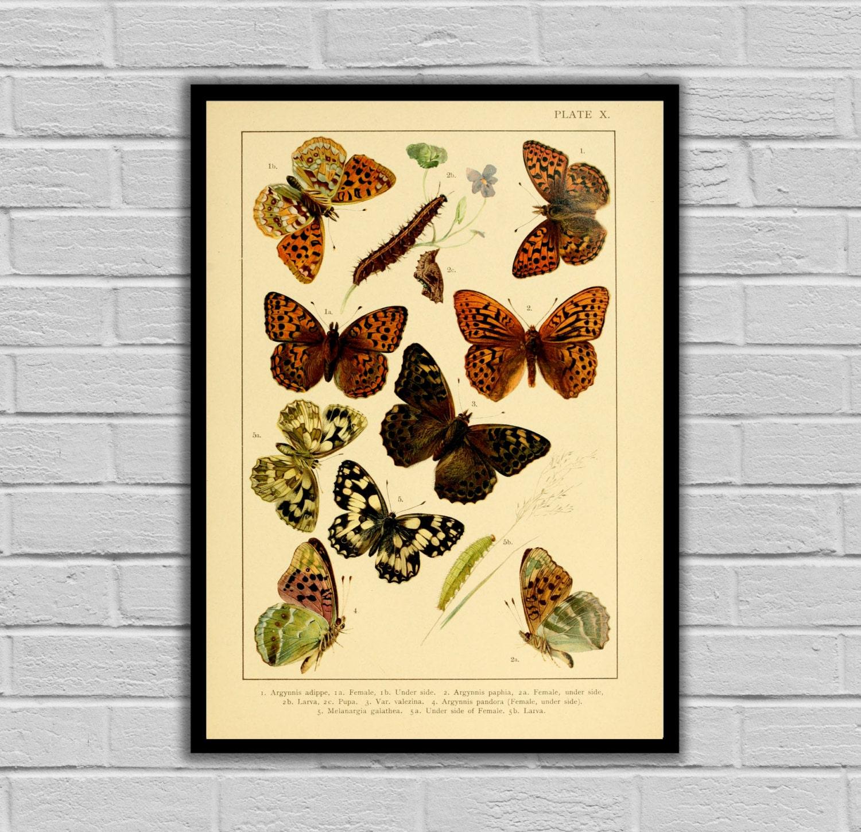 Vintage Garden Decor - Butterflies - Moths and Butterflies Print ...