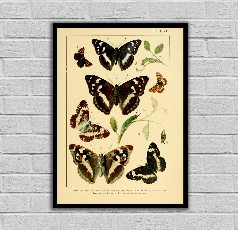 Vintage Butterfly Print - Butterflies - Moths and Butterflies Print ...
