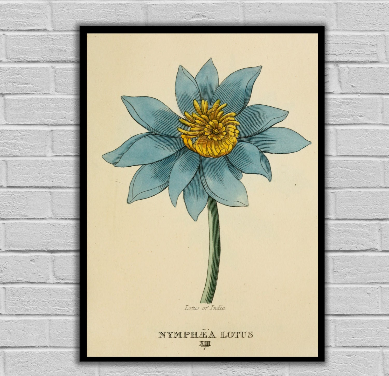 Vintage Botanical Art Lotus Vintage Flower Art Floral Print