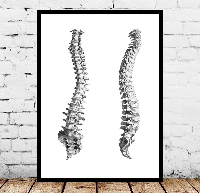 Anatomical Spine Patent Anatomical Spine Poster Anatomical Spine