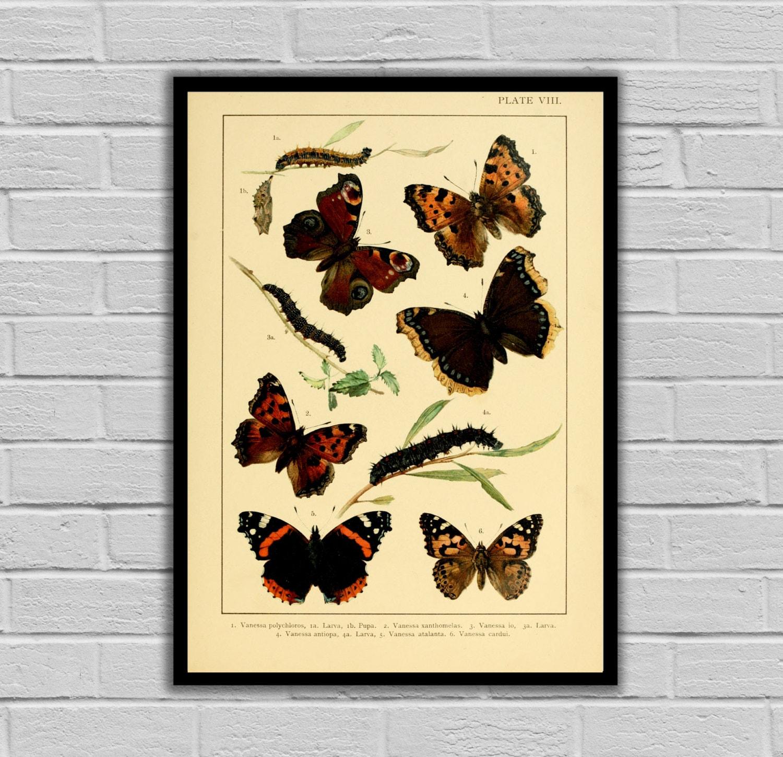Vintage Lithograph Print - Butterflies - Moths and Butterflies Print ...