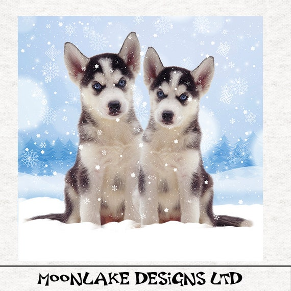 "Picure 10/""x10.5/"" within18/"" x 22/"" FABRIC PANEL to sew SIBERIAN HUSKY with Phrase"