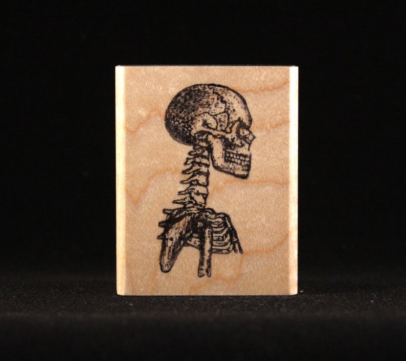 Skeleton's Skull 1 x 1.94 image 0