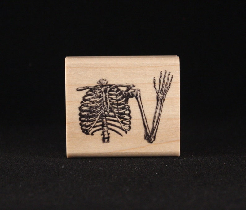 Skeleton's Upper Torso 1.44 x 1.69 image 0