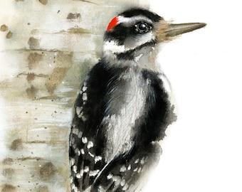 Woodpecker Watercolor -  Giclee Print -  Wildlife Illustration - Bird Paintng