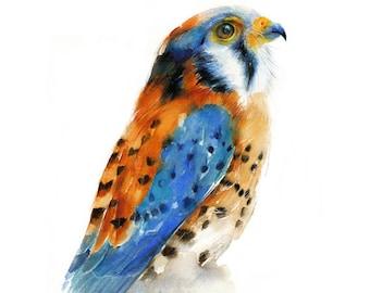 Bird Watercolor Painting - Kestrel Falcon - Giclee Print. Nature or Bird Illustration,  Small Gift