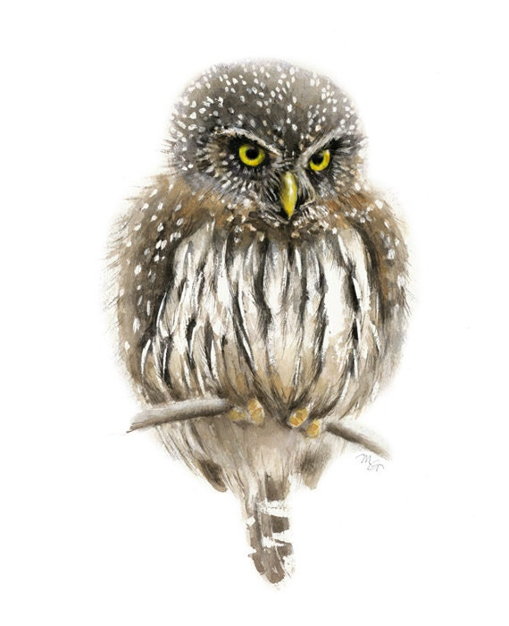 Owl watercolor painting - Bird Art Print. Pygmy Owl. Bird Illustration.