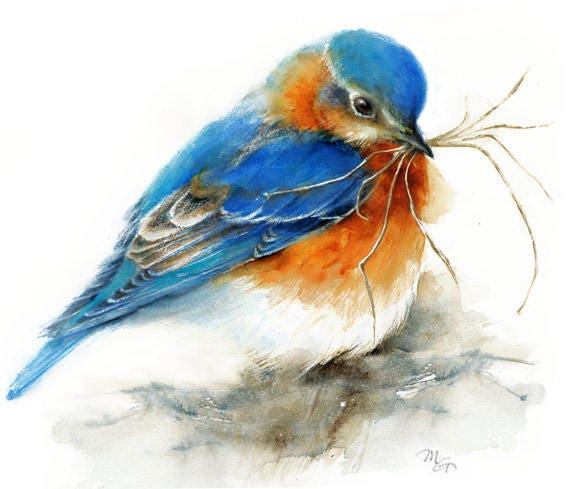 Eastern Bluebird Watercolor Painting Giclee Print Bird Etsy