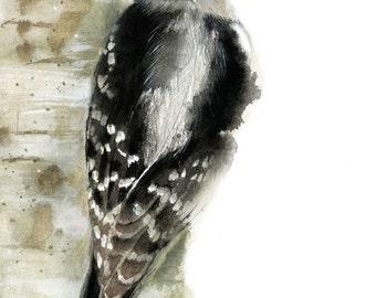 Woodpecker Watercolor -  Bird Art Print -  Wildlife Illustration - Bird Paintng