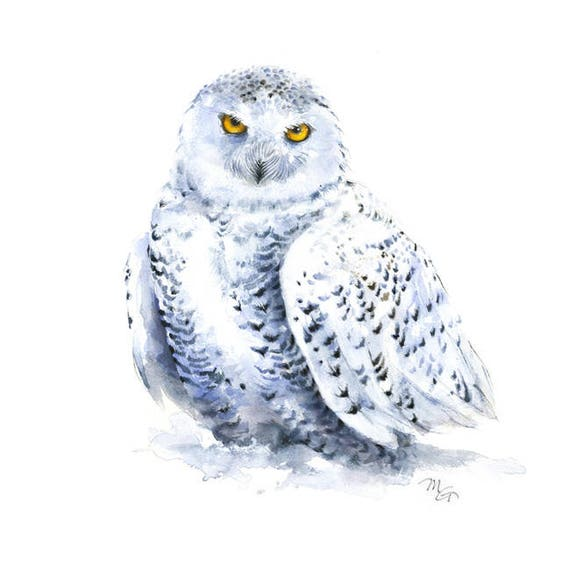 Snowy Owl watercolor painting - Giclee Print. Bird Illustration Snow Winter
