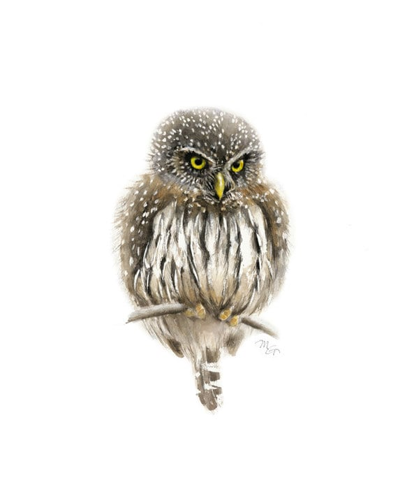 Owl watercolor painting - Giclee Print. Pygmy Owl. Bird Illustration.