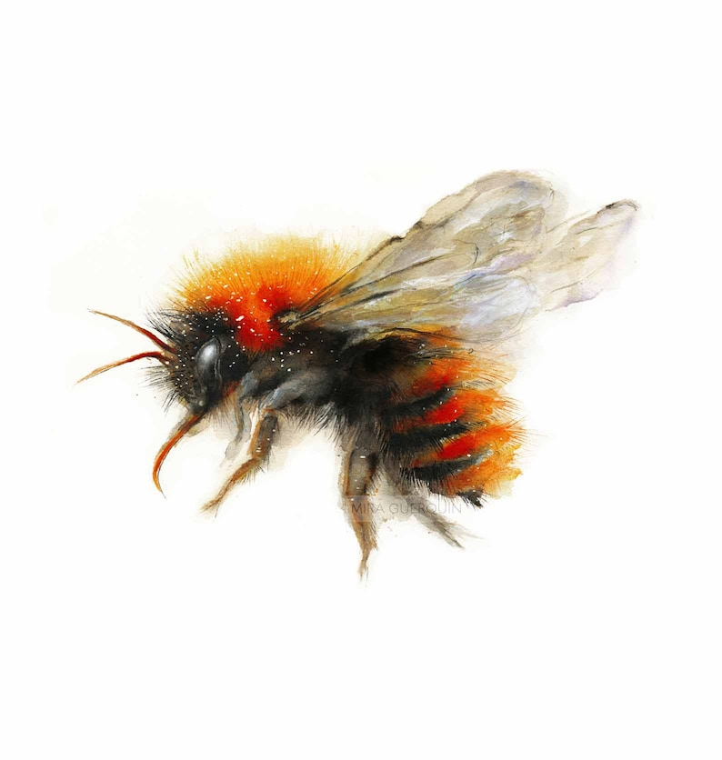 Bee watercolor painting  Bumble Bee Flying Giclee Print image 0