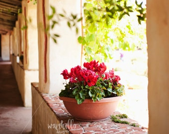 Fine Art Print - Floral Photography - Home Decor