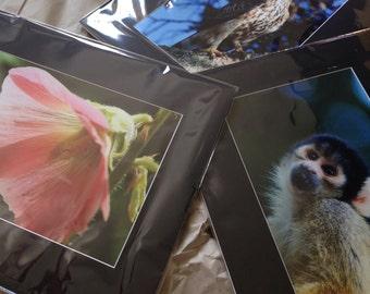 "Custom Wildlife Photo Print (15"" x 10"")"
