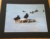 "Ducks on a Smokey Lake - Wildlife Photo Print (8"" x 6"")"