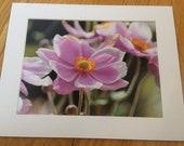 "Pink Japanese Anemone Flower - Wildlife Photo Print (8"" x 6"")"
