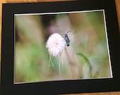 "Blue Green Beetle - Wildlife Photo Print (8"" x 6"")"