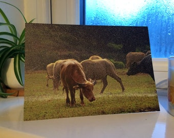 Cattle in the Rain Wildlife Photograph Blank Greetings Card