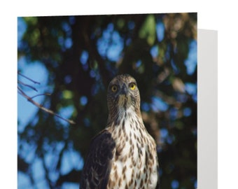 Eagle Bird Wildlife Photograph Blank Greetings Card