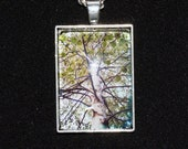 Silver Birch Tree Nature Photo Pendant Necklace