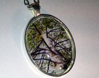 Silver Birch Nature Photo Silver Pendant Necklace