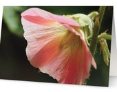 Hollyhock Flower Nature  Photograph Blank Greetings Card
