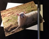 Lamb Wildlife Photograph Blank Greetings Card