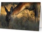 Deer Blank Greetings Card...