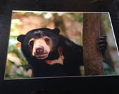 Sun bear in the shade - M...