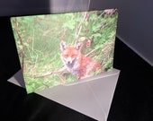 Red Fox Wildlife Photograph Blank Greetings Card