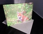 Red Fox Wildlife Photograph Blank Greetings Card