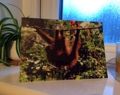 Orangutan Swinging throug...
