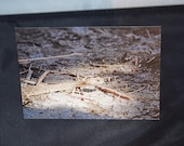 Rattlesnake Wildlife Photograph Blank Greetings Card