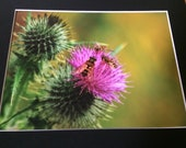 "Hoverfly conference - Wildlife Photo Print (8"" x 6"")"