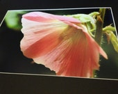 "Shade of the Hollyhock - Mounted Wildlife Photo Print (20"" x 16"")"