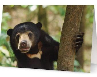 Sun bear Blank Greetings Card
