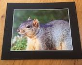 "Squirrelling Away - Wildlife Photo Print (8"" x 6"")"