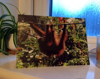 Wildlife Nature Photograph Assorted Blank Greetings Cards (Pack of Five)