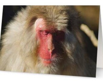 Japanese Macaque Greetings Cards (Pack of Five)