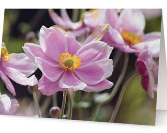 Japanese Anemone Flower Blank Greetings Cards (Pack of Five)