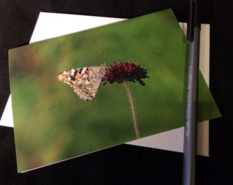 Butterfly Wildlife Photograph Blank Greetings Card