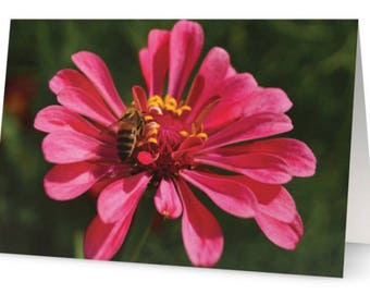 Bee Feeding on a Pink Flower Blank Greetings Cards (Pack of Five)