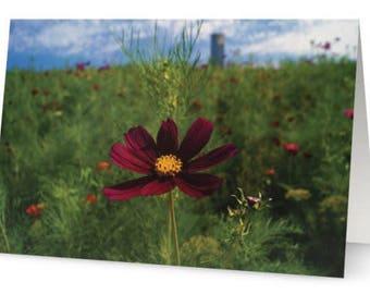 Maroon Flower Greetings Cards (Pack of Five)