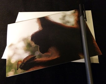 Orangutan Eating a Banana Wildlife Photograph Blank Greetings Card