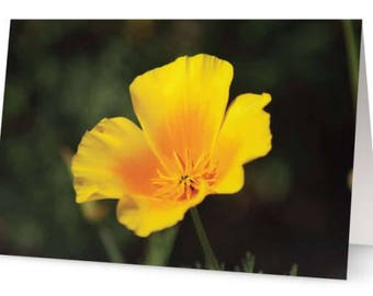 Californian Poppy Greetings Cards (Pack of Five)