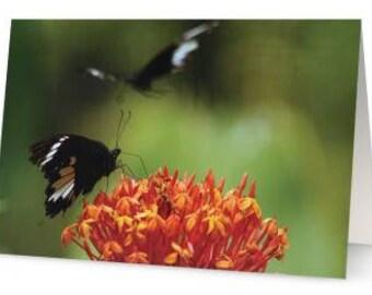 Butterflies Blank Greetings Cards (Pack of Five)