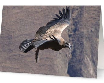 Condor Greetings Cards (Pack of Five)